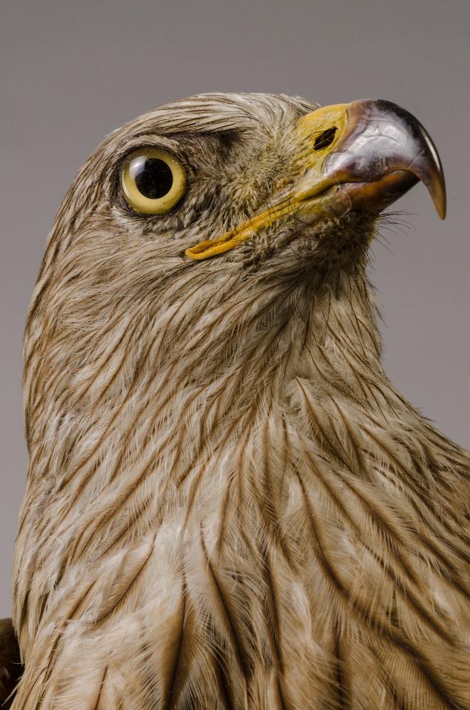 collection  ornithologie  musée de saintdizier